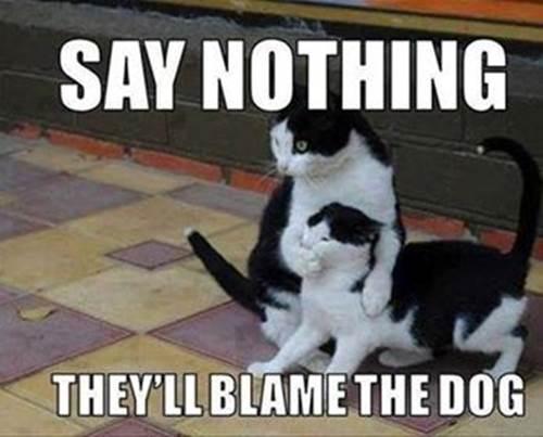 Blame-the-dog