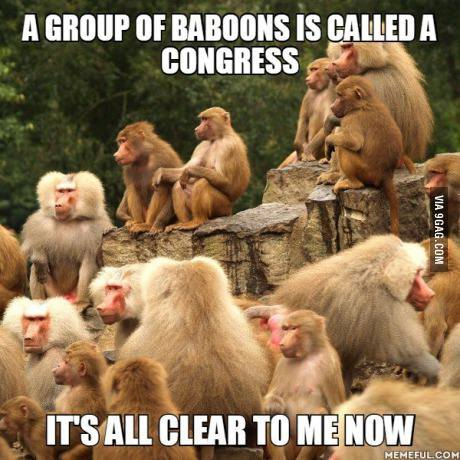 A-group-of-baboons-is-a-Congress