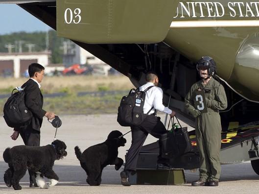 obama-dogs-800