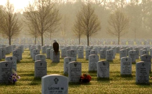 Eagle at Arlington Cemetary