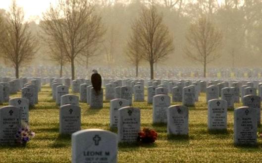 Eagle at Arlington Cemetary