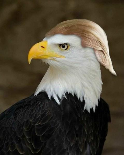 trump-eage
